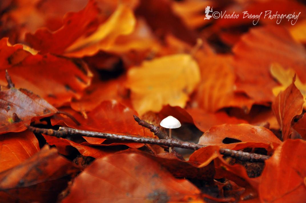 liten svamp